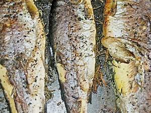 Lachsgerichte Aus Dem Backofen : forelle aus dem backofen von phillip ~ Markanthonyermac.com Haus und Dekorationen