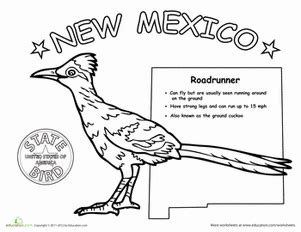 new mexico state bird worksheet education