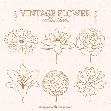 disegni di fiori bellissimi bellissimi disegni di fiori scaricare vettori gratis