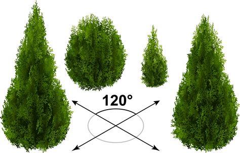 black accent shrub garden care armbruster landscaping