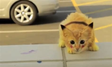 Finally Proof That Real Life Pikachu Is Feline Video