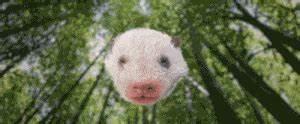 Grosse Peluche Panda : video yuan meng le panda de beauval de petite saucisse grosse peluche d couvrez notre ~ Teatrodelosmanantiales.com Idées de Décoration