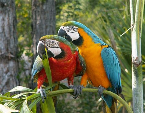 cute parrot pictures incredible snaps