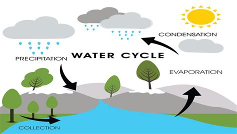 Water Cycle Images Water Cycle Brain And Builders Hartmann