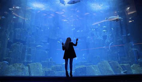 les rois de l aquarium le roi des aquarium 28 images club de l aquarium ex ozu salle pour anniversaire comit 233
