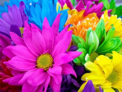 bright flowers pictures bright flowers flowers wallpapers