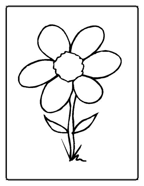 flowers free colouring pages
