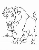 Coloring Bison Pages Printable Animals Toddler Bestcoloringpagesforkids Calm Quiet Toddlers Wild Animal sketch template