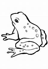 Coloring Frog Pages Harlequin Toad Printable Colouring Print Preschoolers Animal Frogs Snacks Parentune Printables Animals Worksheets sketch template