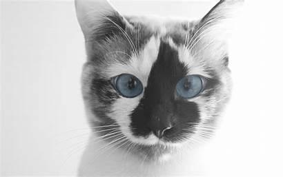 Cat Funny Desktop Face Windows