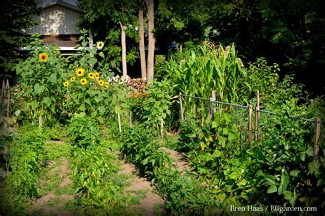 Garden Types : How To Plan A Vegetable Crop Rotation