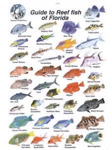 Florida Fish Identification