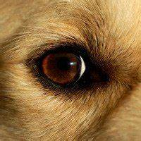 Recognizing and treating dog cataracts - Dogtime