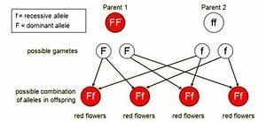 Genetic Variation And Genetic Disorders
