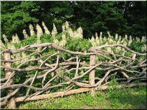 Die Hecke Natuerlicher Zaun Und Sichtschutz by Die Besten 25 Sichtschutz Weide Ideen Auf