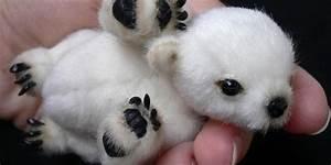 Hairless Polar Bear | www.pixshark.com - Images Galleries ...