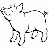 Pig Coloring Smell Nice Something Pot Pages Drawing Template Outline Porco свинья Clipart Colouring Clip Coloringsky Farm Bellied Animal Sketch sketch template