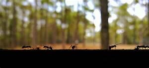 Hausmittel Gegen Ameisen Im Garten : ameisen hausmittel hausmittel gegen ameisen hausmittel gegen ameisen im haus und im garten ~ Whattoseeinmadrid.com Haus und Dekorationen