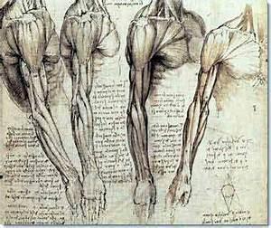 3d Printed Anatomy Kits Reduce Need To Study Human