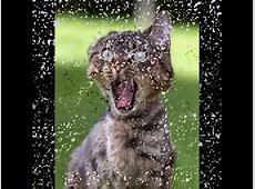 lustige Katzenbilder zum totlachen YouTube