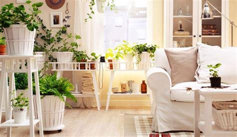 ideas  decorar tu casa  plantas