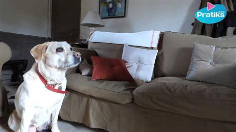 empecher un chien de monter sur le canapé comment empecher chien de monter sur le canape 28 images