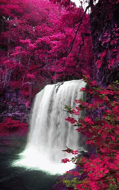 Nature Scenery Flower Animated Waterfalls