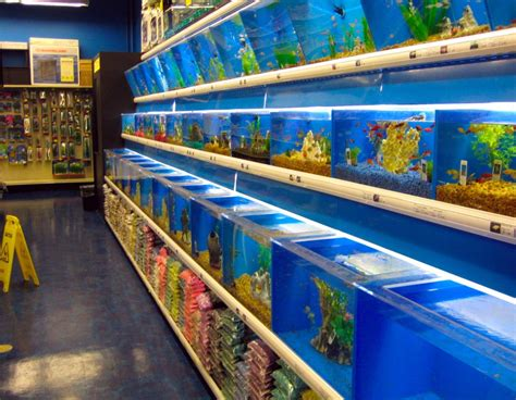 how to store fish fish and aquarium stores aquarium design ideas
