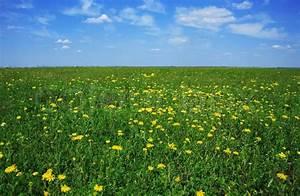 Wiese Mit Blumen : gr ne wiese mit gelben blumen an einem stockfoto ~ Watch28wear.com Haus und Dekorationen