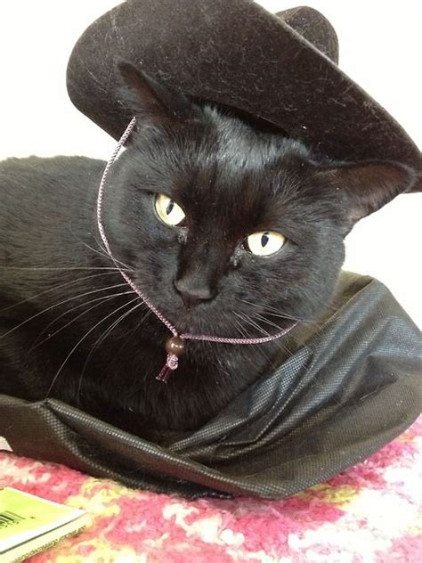 Best 20 Cats In Cowboy Hats Images On Pinterest Cowboy