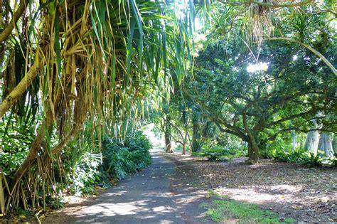 foster botanical garden corpse flower in bloom hawaii aloha travel