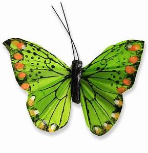 Schmetterlinge Als Deko : deko schmetterlinge am draht 8cm preiswert online kaufen ~ Lizthompson.info Haus und Dekorationen
