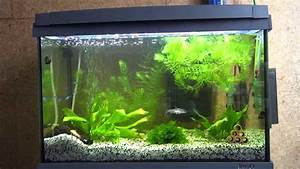 Bremsenreiniger 60 L : tetra aquaart 60 led youtube ~ Kayakingforconservation.com Haus und Dekorationen