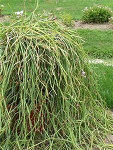 Plante Succulente Espèces Représentatives : plante grasse page 5 paris c t jardin ~ Nature-et-papiers.com Idées de Décoration