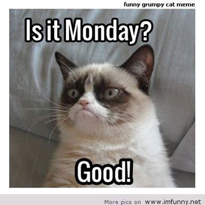 Grumpy Cat Monday Meme - grumpy cat monday dance super digi