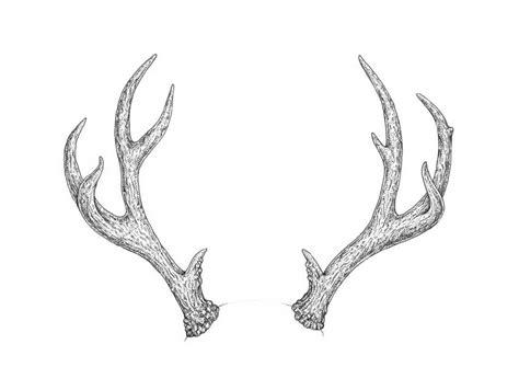 draw antlers step  step