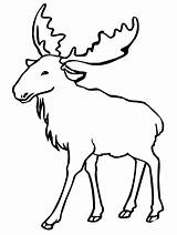 Moose Elk Coloring Pages Clipart Printable Animal Outlines Drawing Bull Line Eurasian Funny Animals Simple Cute Colouring Cartoon Drawings Sheet sketch template