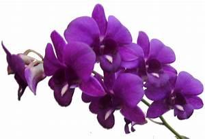 PNG Violets Flowers Transparent Violets Flowers.PNG Images ...