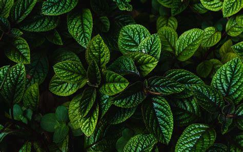 wallpaper  leaves green bushes carved