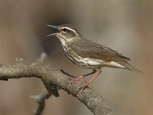 Ohio Birds Identification