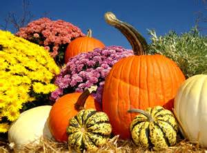 Fall Scenes with Pumpkins and Mums