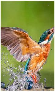 Kingfisher Wallpapers - Wallpaper Cave