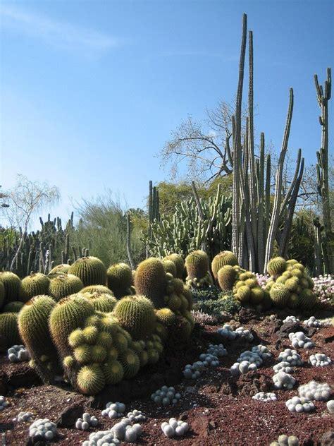 desert garden theme  plants    desert gardens