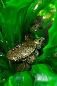 terrapin hatchlings get ready for school zooborns