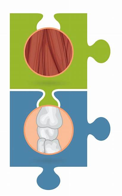 Clipart System Muscle Musculoskeletal Transparent Head Health