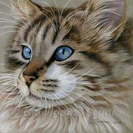 Colored Pencil Cat Drawing