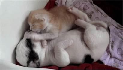 Puppy Gifs Cuddling Cat Dog Need Friend