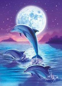 Schöne Delfin Bilder : 132 besten tiere delfine bilder auf pinterest delphine meerestiere und beautiful creatures ~ Frokenaadalensverden.com Haus und Dekorationen
