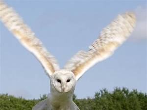 Owl HD Wallpapers Desktop Pictures – One HD Wallpaper ...