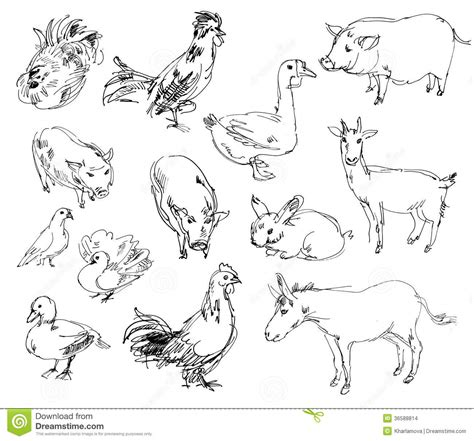 farm animals stock images image